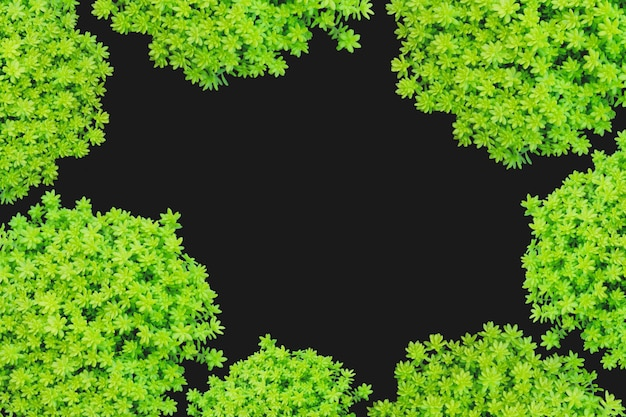 Top view of small green plant isolated on black background. Premium Photo