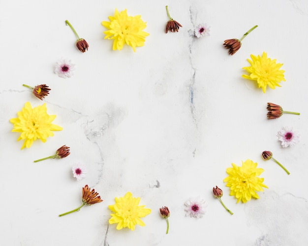 Top view of spring daisies with marble background Free Photo