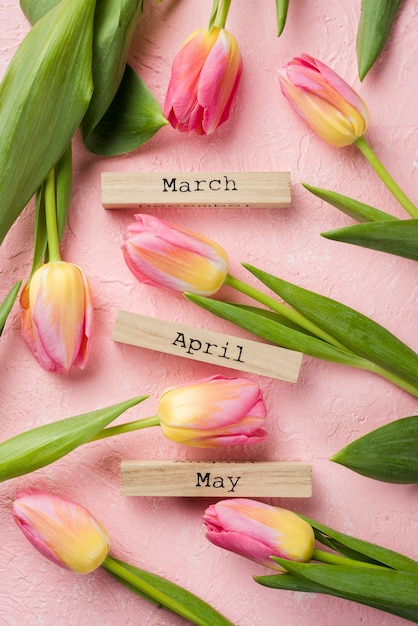 Top view spring months tags with tulips beside Free Photo