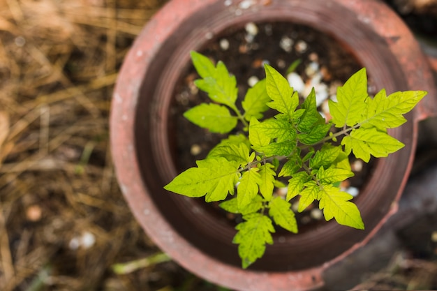 Top view sprouting plant in a pot Free Photo