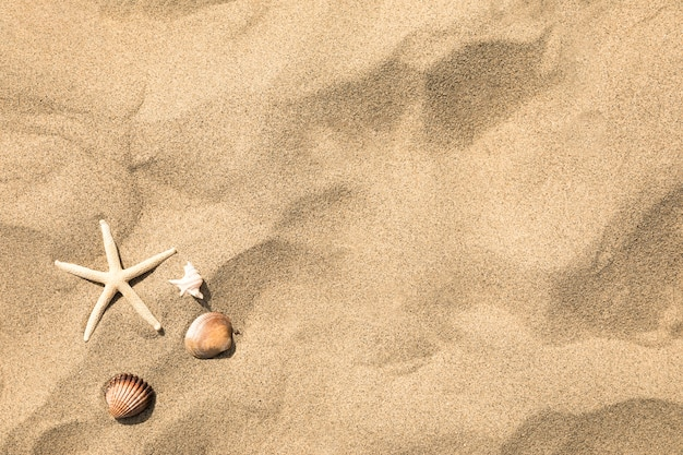 Top view of starfish and shells on tropical sandy beach Free Photo