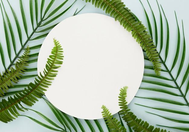 Vista dall'alto di foglie sottili e felci con copia spazio Foto Gratuite