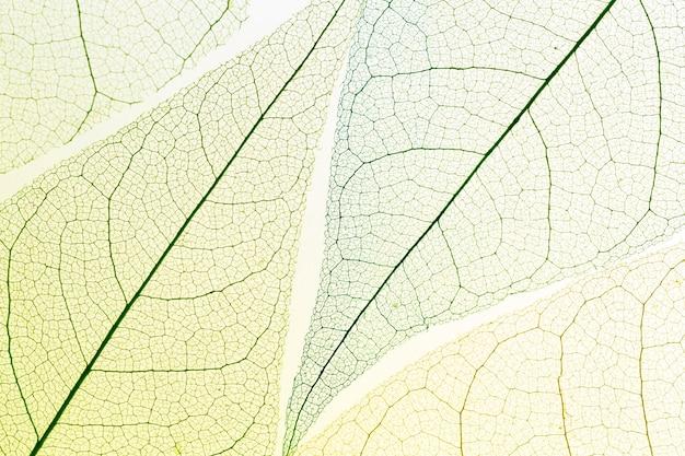 Vista dall'alto di foglie trasparenti Foto Gratuite