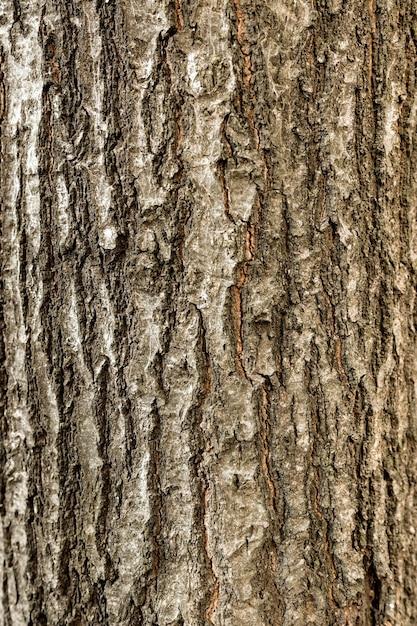 Top view of tree bark Free Photo