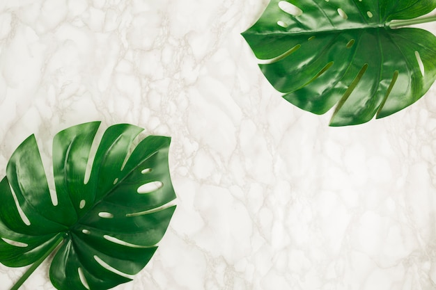 Top view tropical leaves on marble Free Photo