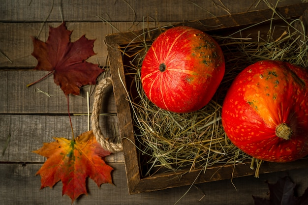 Top view of two small autumn pumpkins in straw, maple leaves Premium Photo