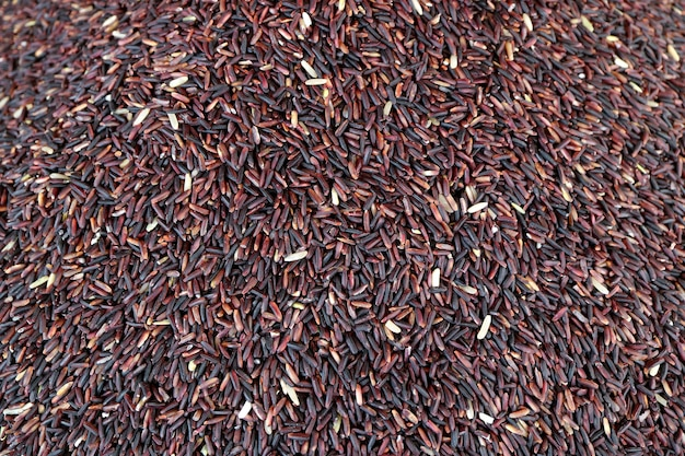 Top view of uncooked deep purple color rice-berry rice grains for background Premium Photo