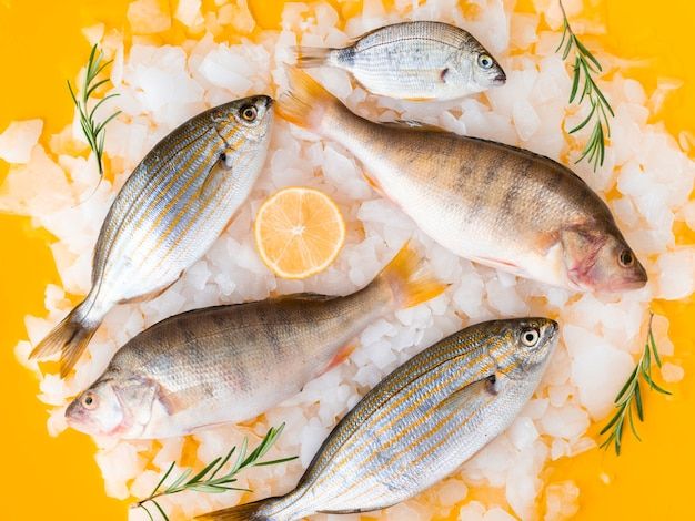 Top view variety of fresh fishes on ice Free Photo
