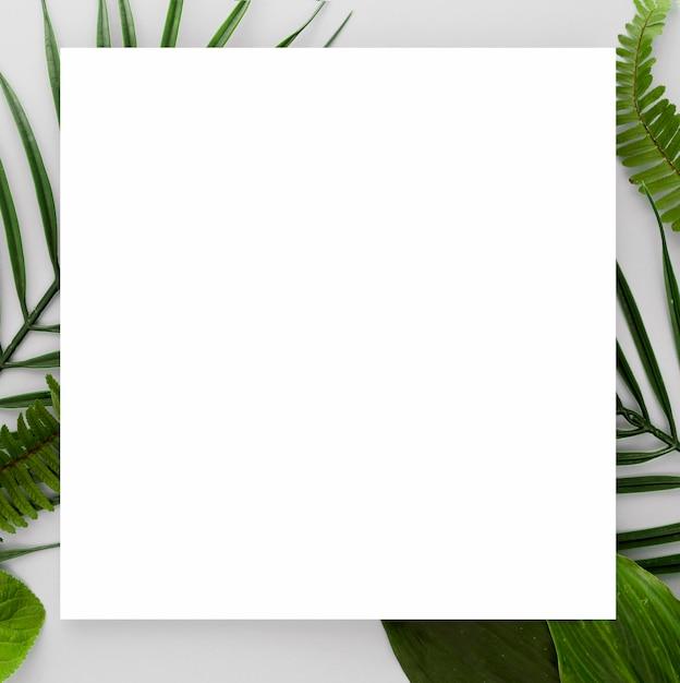 Vista dall'alto di varietà di foglie con copia spazio Foto Gratuite