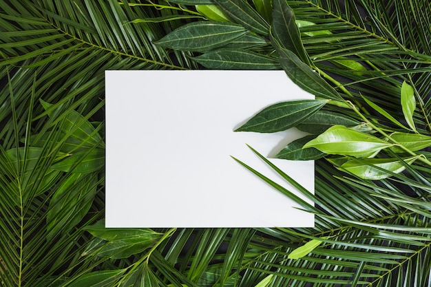Top view of white blank page on green leaves Free Photo