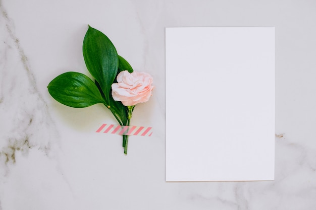 Top view white clean blank for your text, pink carnation and quail eggs on marble background. Premium Photo