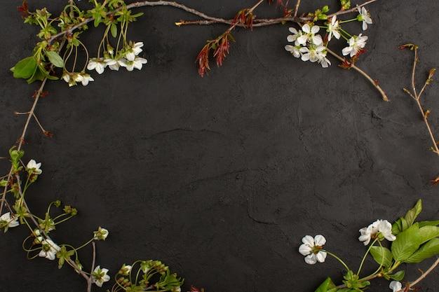 暗い背景に平面図の白い花 無料写真