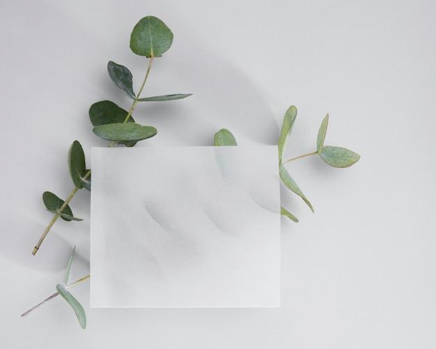 상위 뷰 흰색 프레임으로 둘러싸인 Leafs 프리미엄 사진