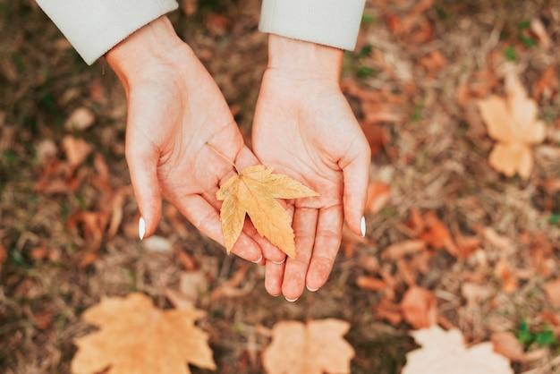 가을 잎을 들고 상위 뷰 여자 프리미엄 사진