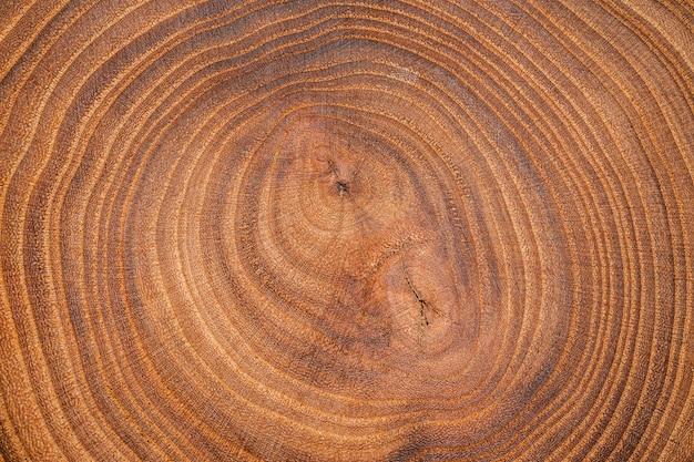 상위 뷰 나무 배경 무료 사진