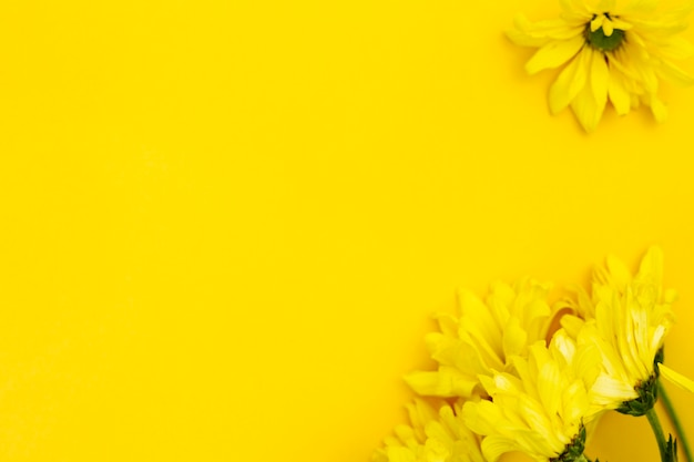 Top view yellow flower with copyspace Free Photo
