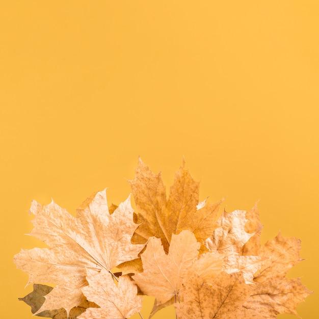 コピースペースを持つ上面黄色の葉フレーム 無料写真