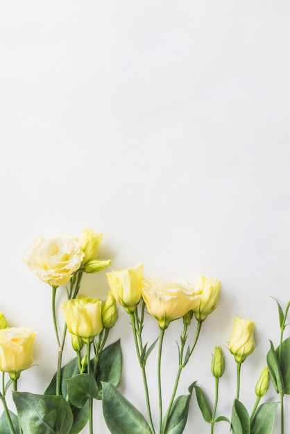 Top view of yellow roses Free Photo