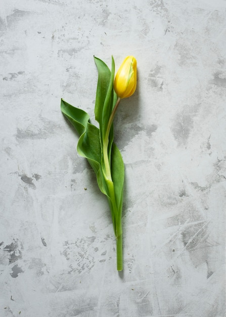 Top view yellow tulip on table Free Photo