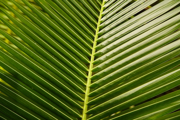 Topical coconut leaves green background Premium Photo