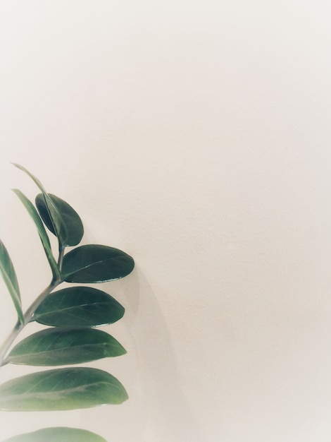 Topview of green leaves are placed on white wall, look like a simple and minimal style. Premium Photo