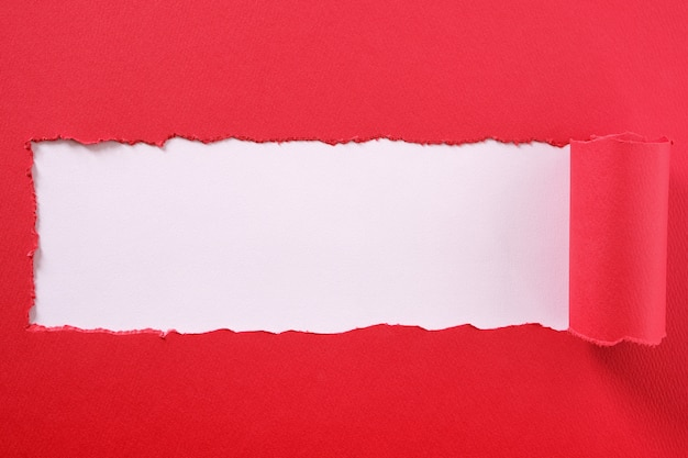 Torn red paper strip curled edge center frame white background Premium Photo