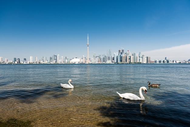 トロントの街のスカイライン、オンタリオ州、カナダ Premium写真