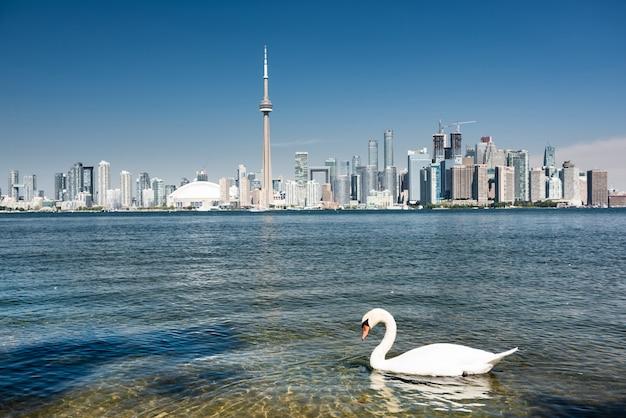 Горизонты города торонто, онтарио, канада Premium Фотографии