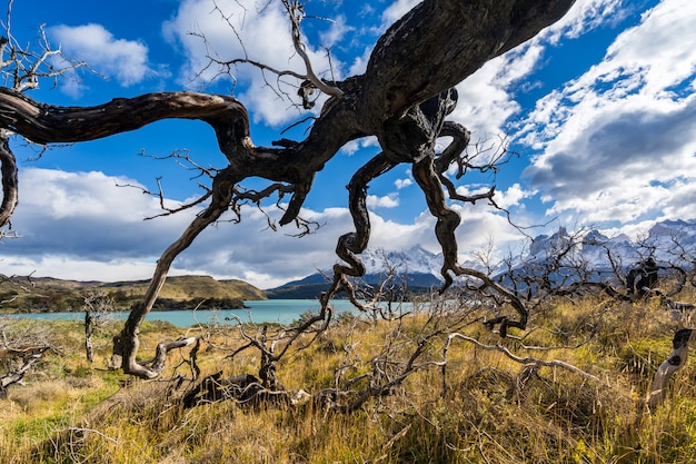 In the torres del paine national park, patagonia, chile, lago del pehoe. Premium Photo
