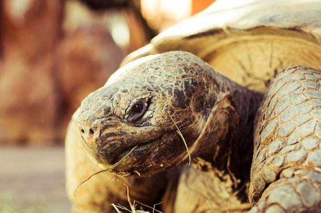 Tortoise Free Photo