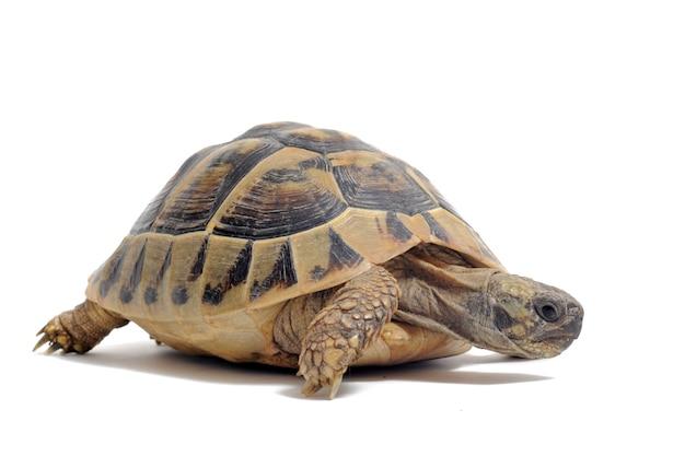 Tortoise Premium Photo