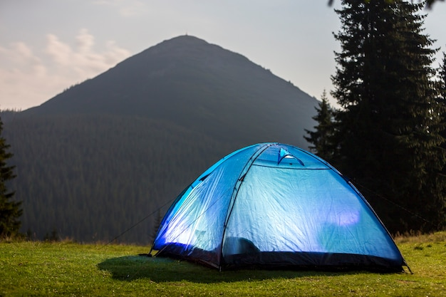 Tourist hikers bright blue tent on green grassy forest clearing among tall pine trees Premium Photo