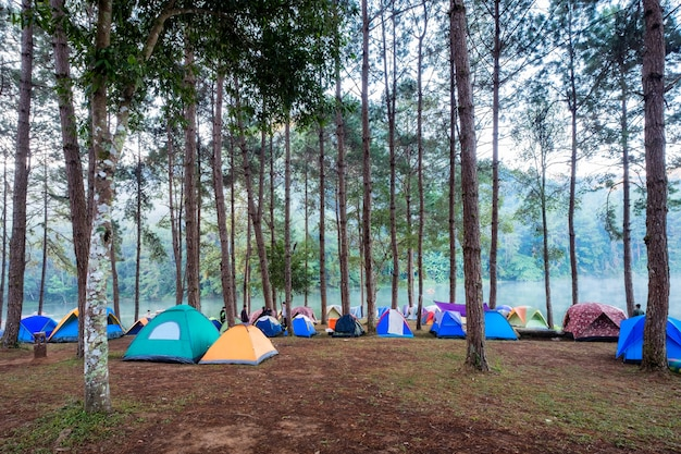 Tourist tent camping in pine forest on reservoir in morning Premium Photo