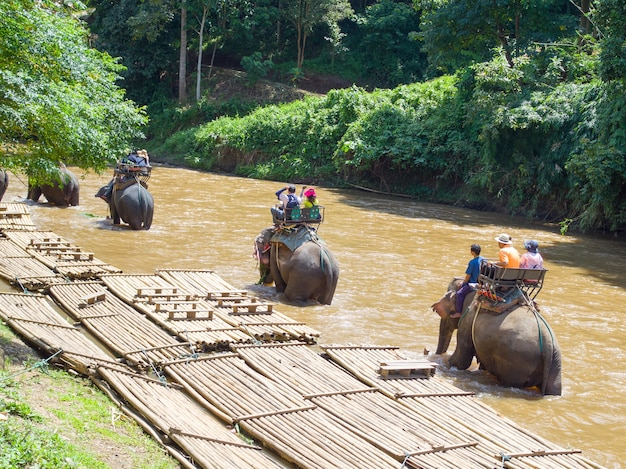 Tourists riding on elephant trekking in thailand Premium Photo