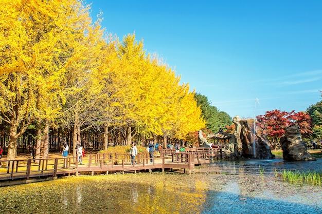 南怡島周辺の秋の美しい風景を写真に撮る観光客 無料写真