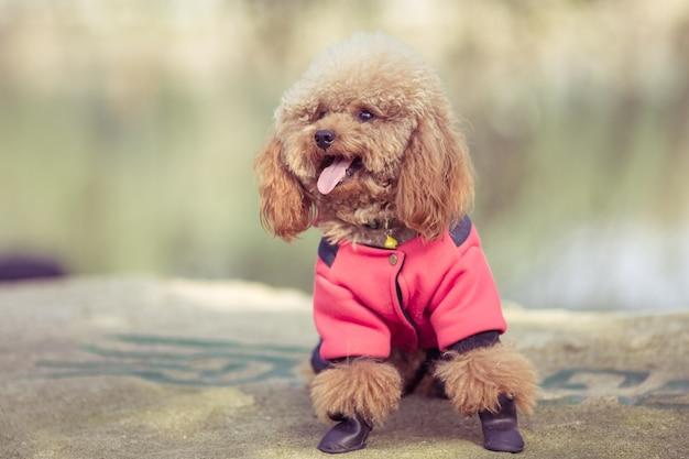 Roupinha para Cachorro