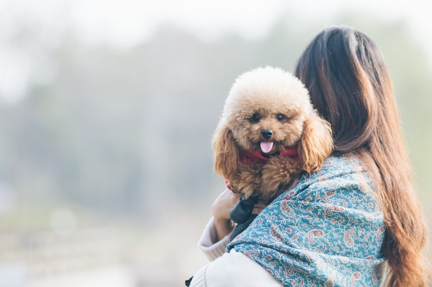 Toy poodle playing with its female master Free Photo