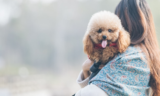 Toy poodle playing with its female master | Free Photo