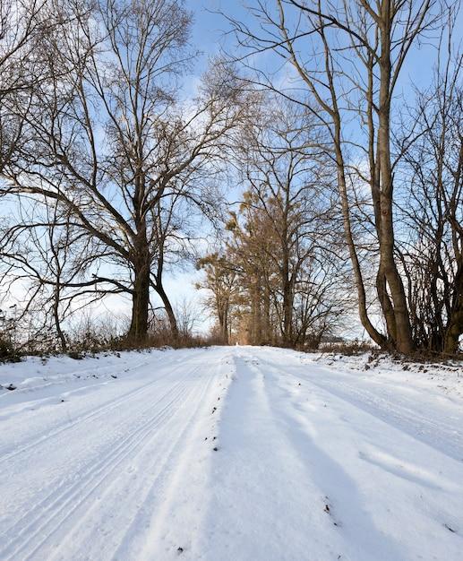 겨울철, 낮 풍경의 나무 사이 도로에서 추적 프리미엄 사진