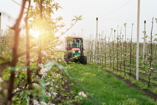 Macchina del trattore che guida attraverso il corridoio del frutteto e irrorazione di meli Foto Gratuite