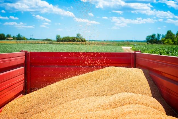Rimorchio del trattore pieno di semi di grano nel campo Foto Gratuite