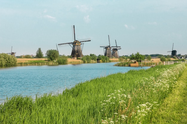 Traditional dutch windmills with green grass in foreground, netherlands Free Photo