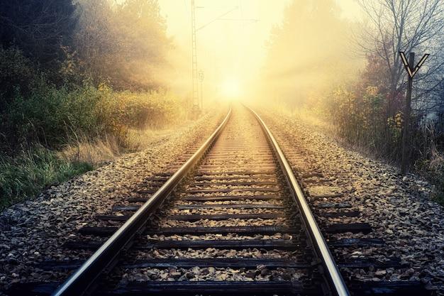 낮에는 푸른 나무 사이의 기차 레일 무료 사진