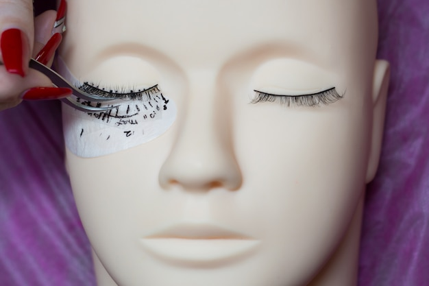 Training a young master to build eyelashes on a silicone mannequin. work with tweezers Premium Photo