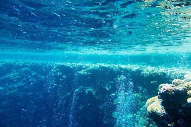 Спокойная подводная сцена с копией пространства Premium Фотографии