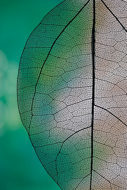 Transparent abstract leaf with green and white Free Photo