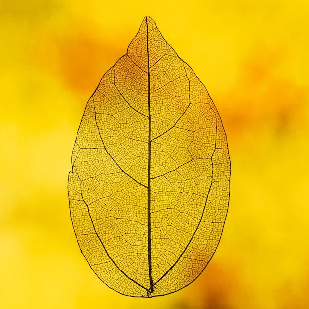 オレンジ色のバックライト付き透明リーフ 無料写真