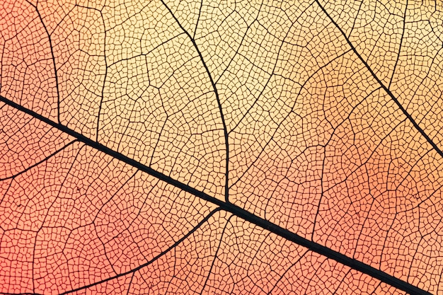 Transparent leaf with orange backlight Free Photo