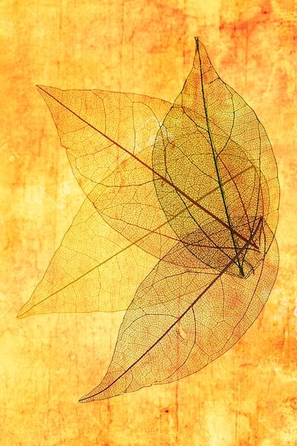 オレンジと黄色の透明な葉 無料写真