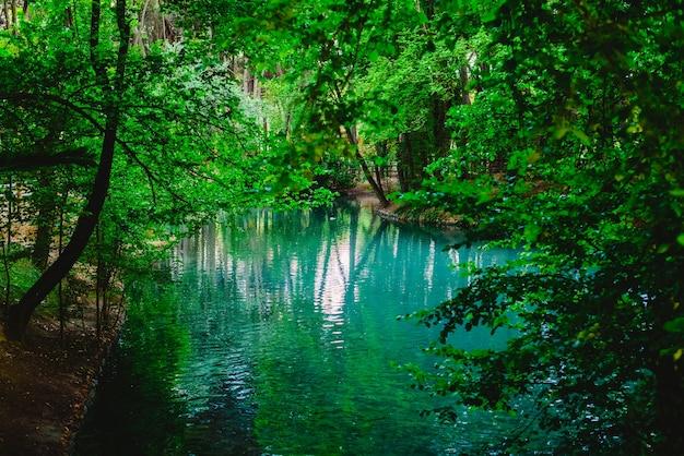 緑の森の中の流れと湖の透明な水 Premium写真
